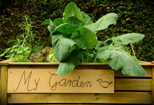 All you need to know about raised beds
