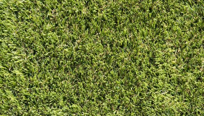 Exbury Dark Artificial Namgrass
